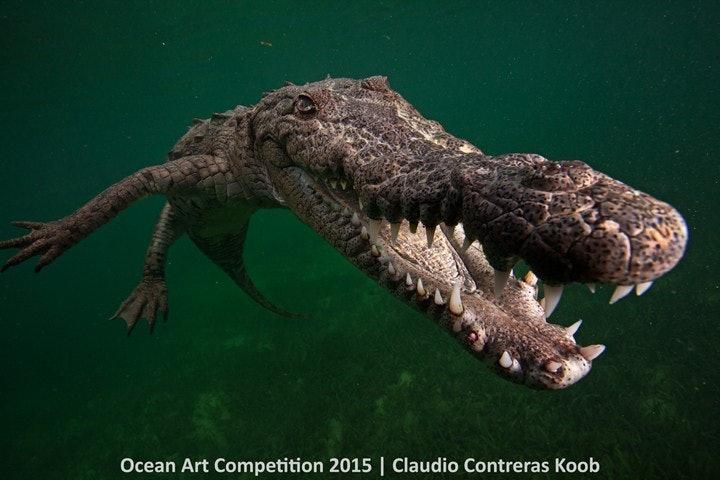 4th-p-ocean-art-2015-claudio-koob-1200