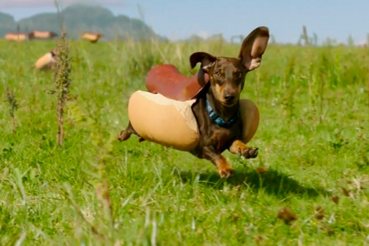 Image result for hot dog dachshunds