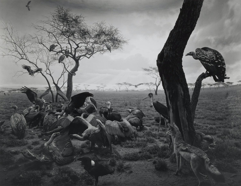 106_Hyena-Jackal_Vulture,-1976