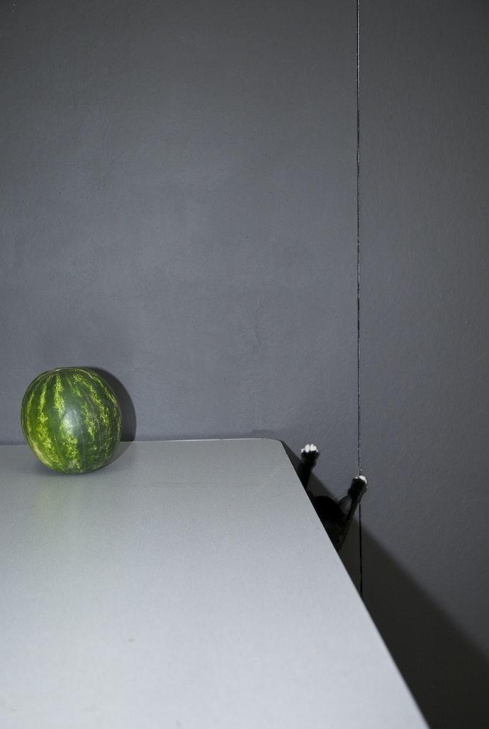 Raymondpawswatermelon
