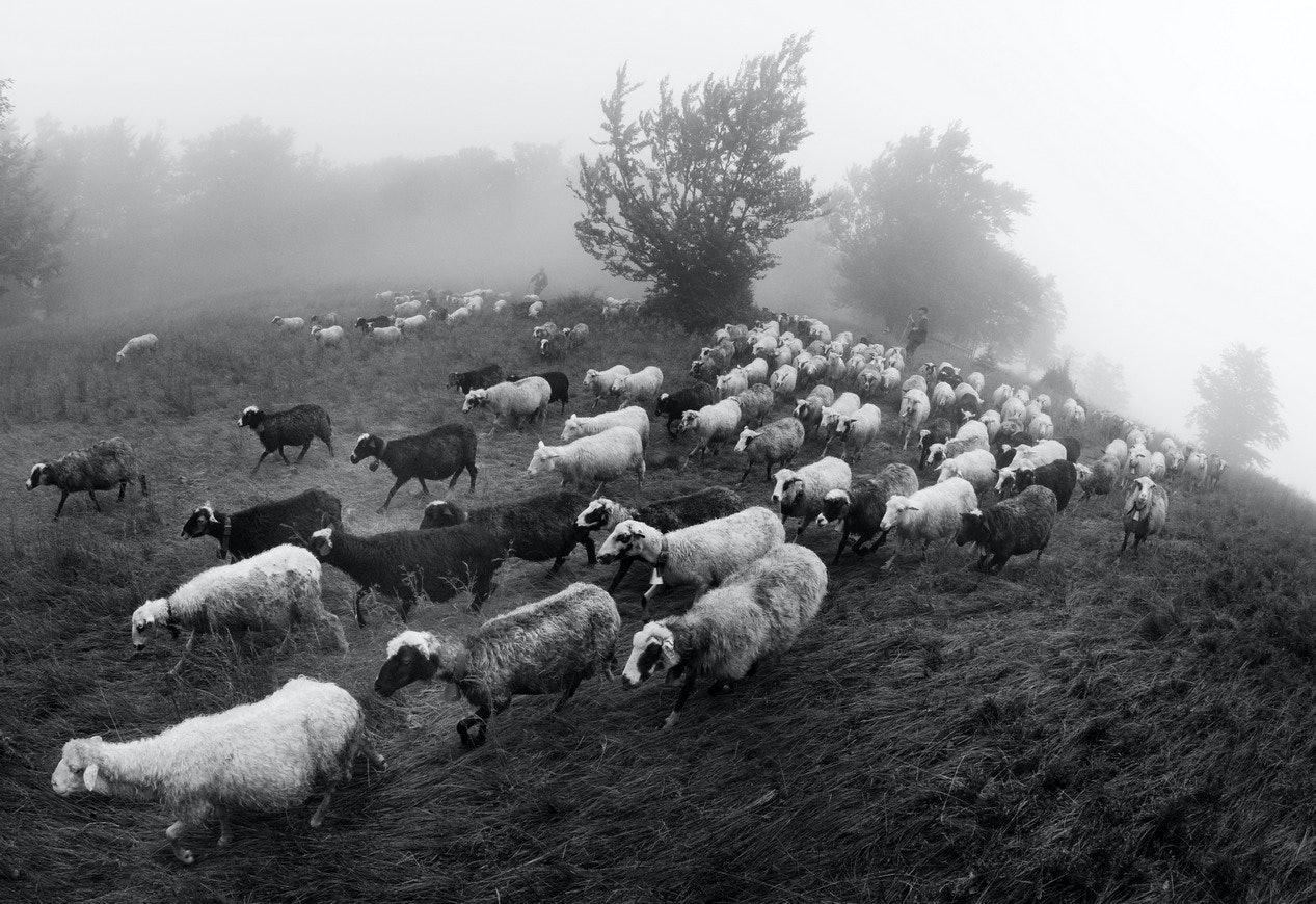 Yurko Dyachyshyn_(Carpathian shepherds)_01_resize