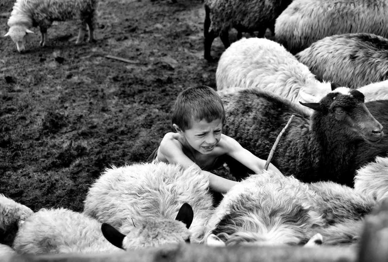 Yurko Dyachyshyn_(Carpathian shepherds)_03_resize