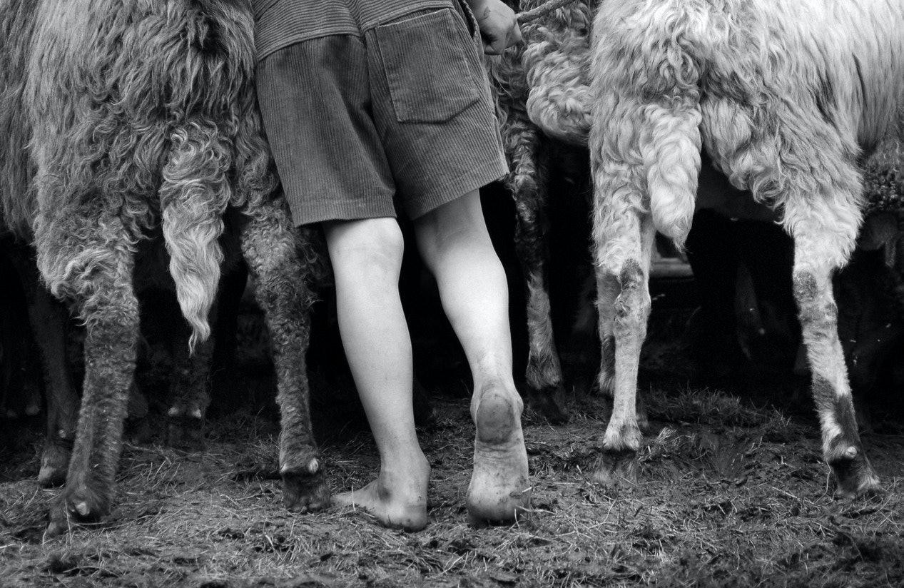Yurko Dyachyshyn_(Carpathian shepherds)_04_resize
