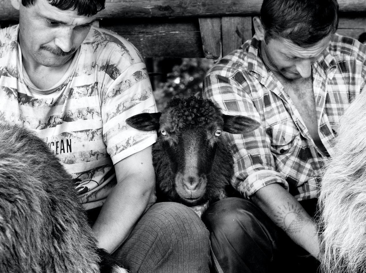 Yurko Dyachyshyn_(Carpathian shepherds)_05_resize