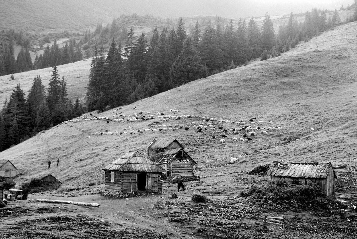 Yurko Dyachyshyn_(Carpathian shepherds)_08_resize