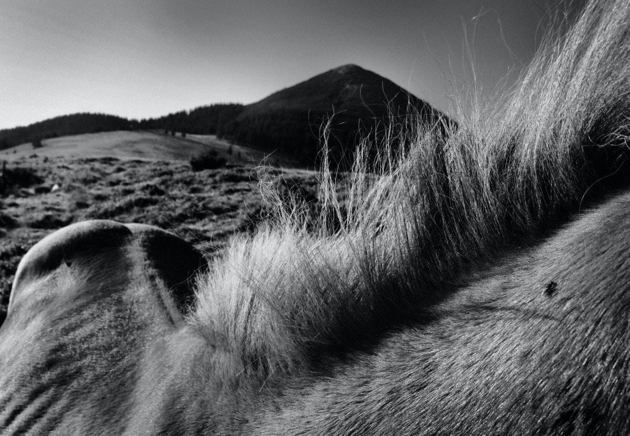 Yurko Dyachyshyn_(Carpathian shepherds)_09_resize