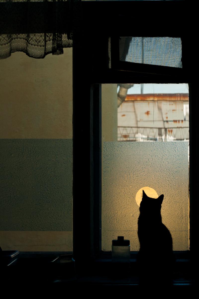 Глазок для кота. Вместо того чтобы вешать занавески, окна на кухне папа заклеил плёнкой. А для кота прорезал дырку, чтобы тот мог наблюдать за жизнью двора