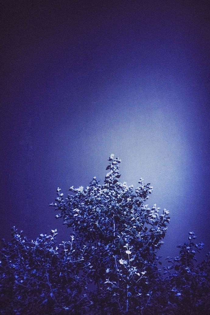 bush-min