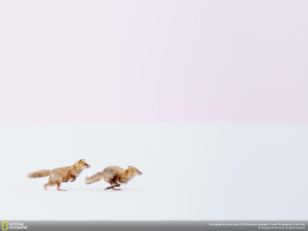 Фото: Хироки Инуе. Wherever you go, I will follow you!!! Первое место в категории «Природа»