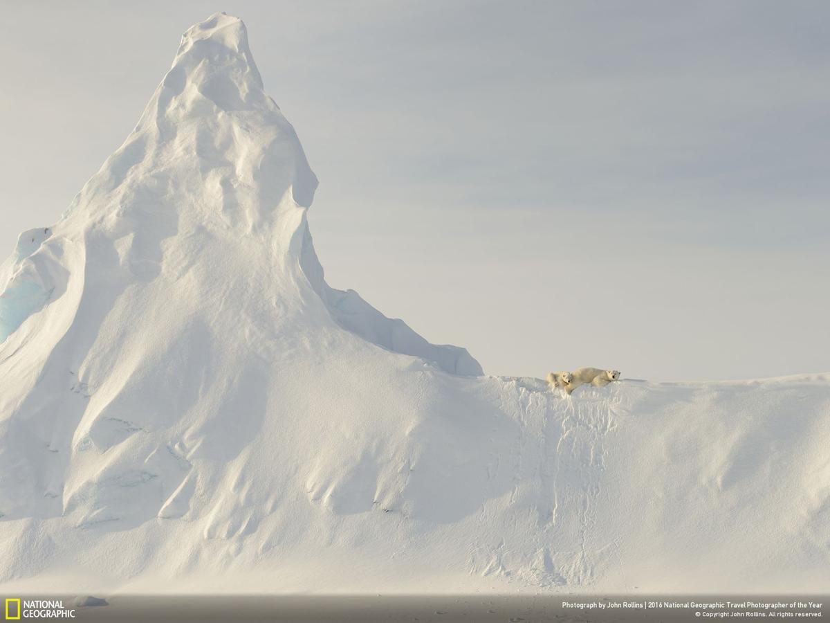 Фото: Джон Роллинс. Bears on a Berg. Специальное упоминание жюри в категории «Природа»