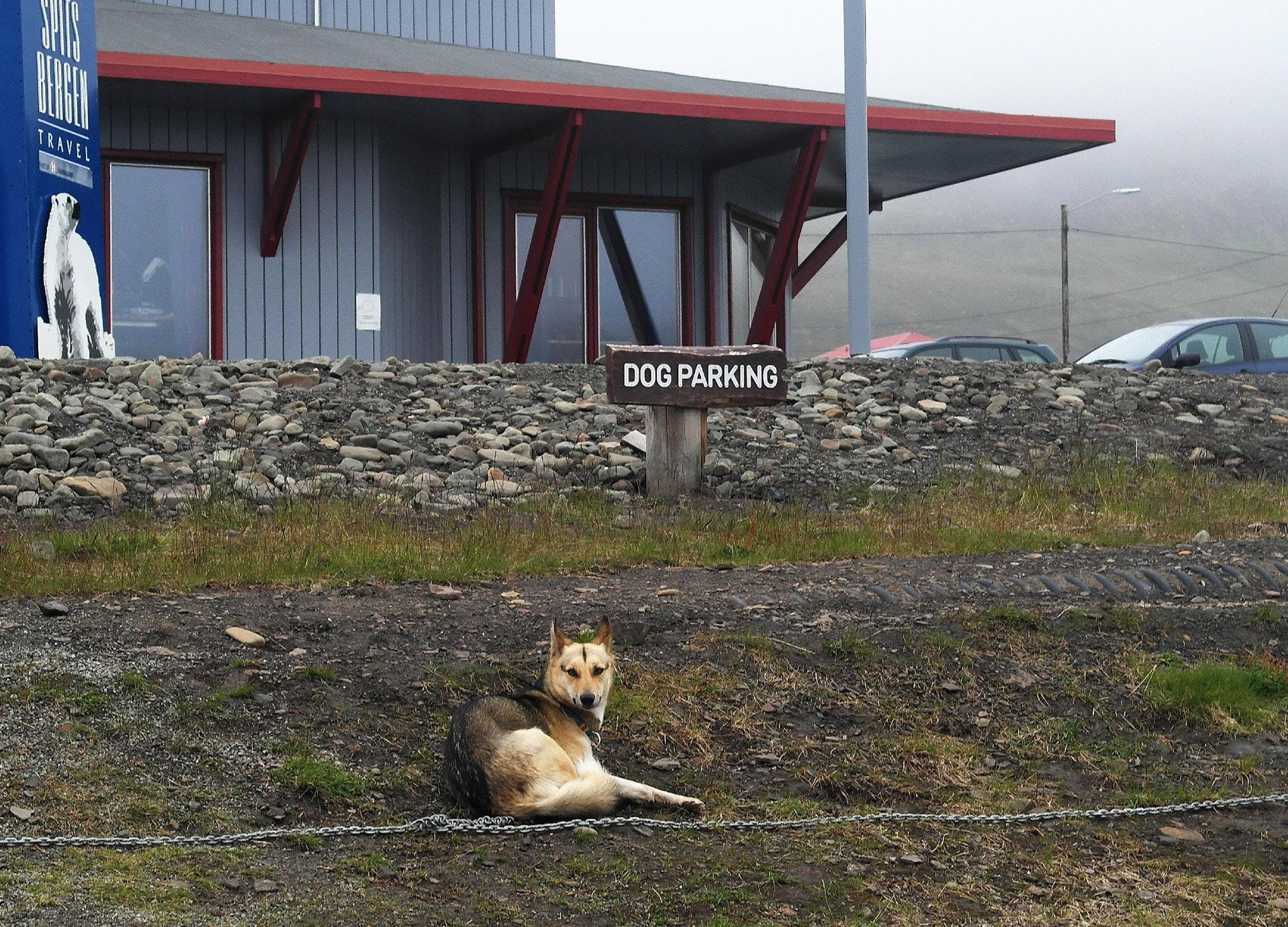Spitzbergen_12