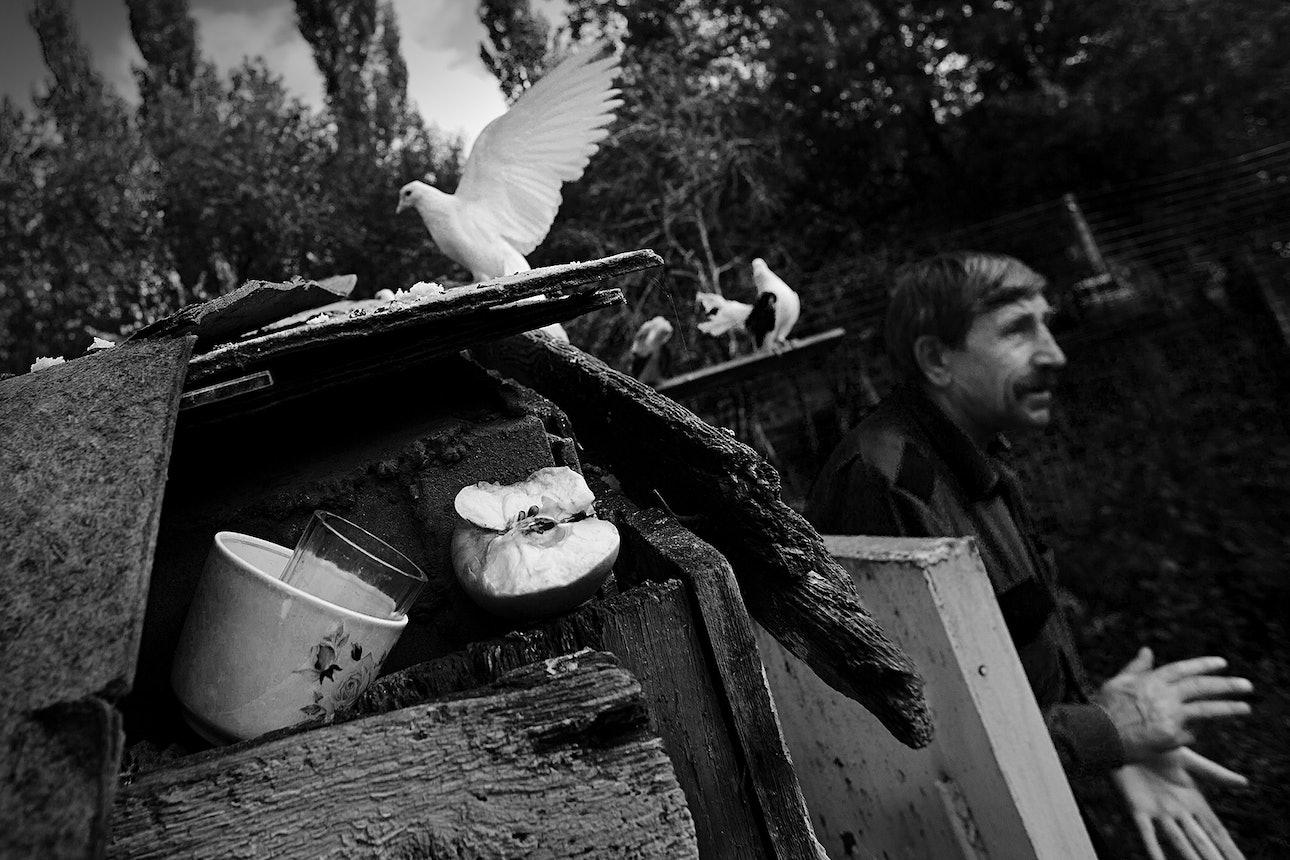 petrov_birds_05