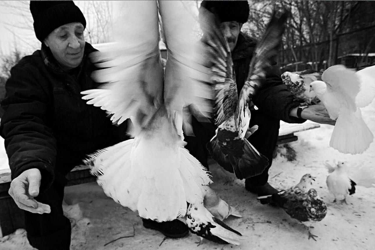 petrov_birds_08