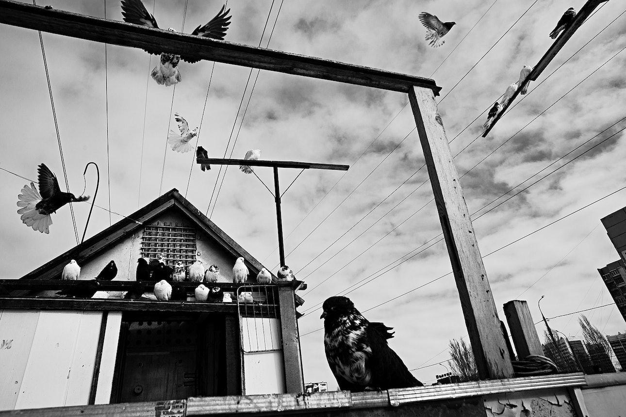 petrov_birds_09