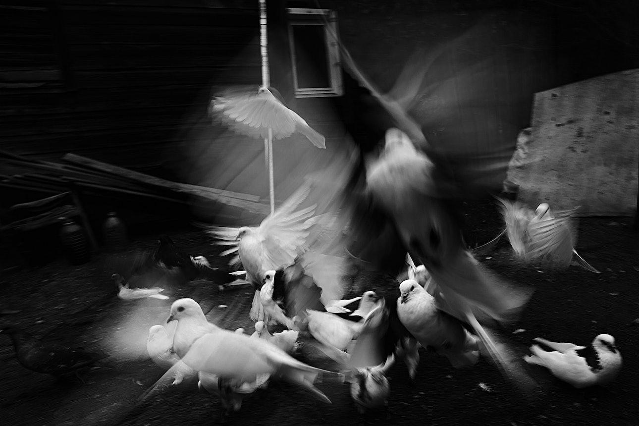 petrov_birds_13