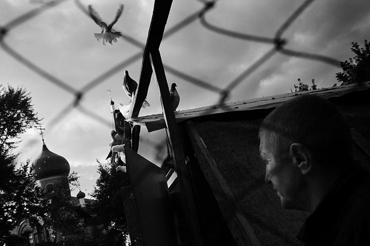 petrov_birds_16