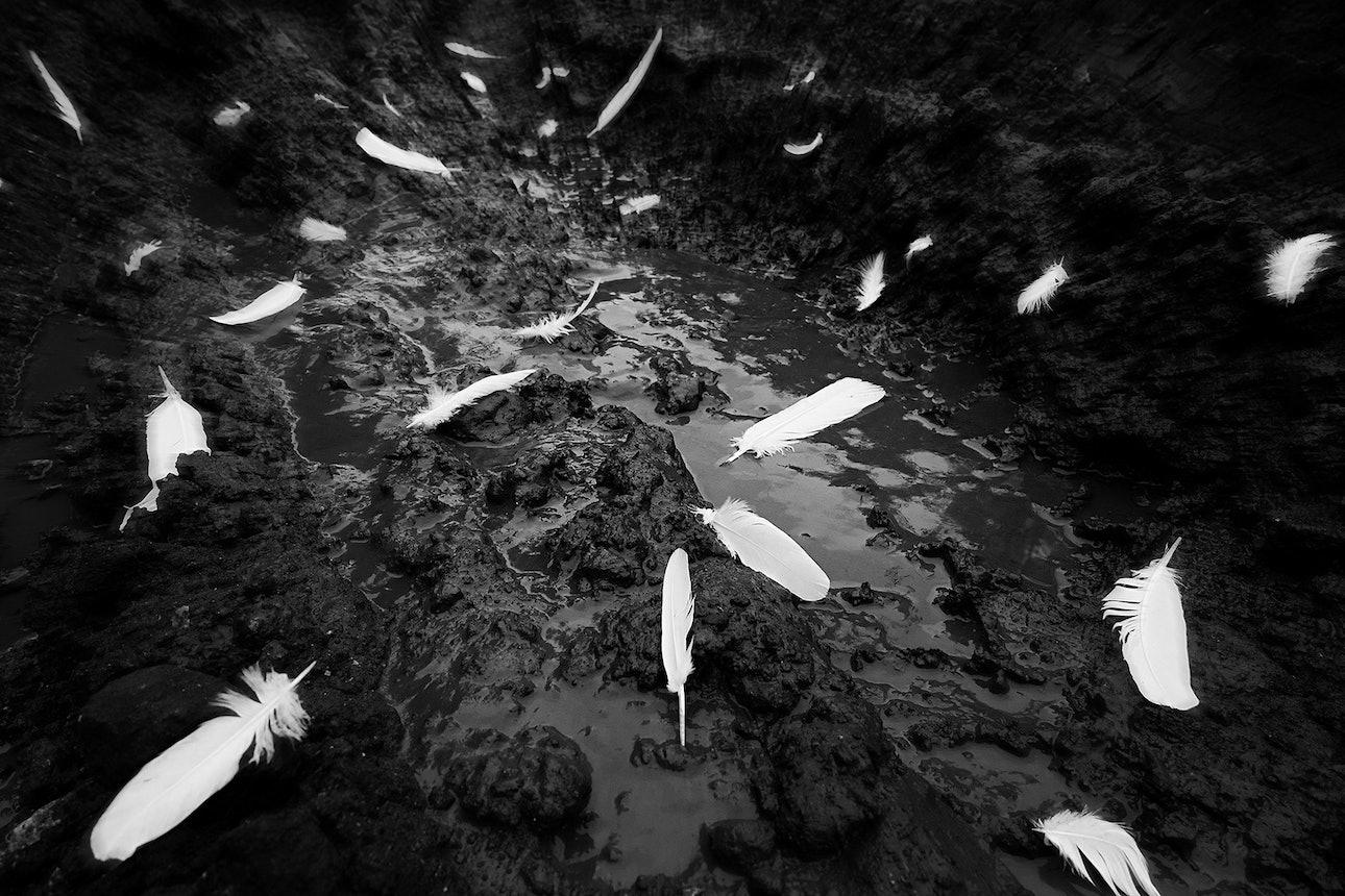 petrov_birds_18