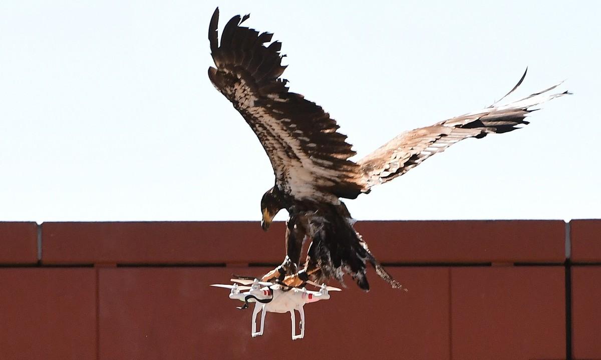 Милиция Нидерландов будет перехватывать беспилотники при помощи хищных птиц