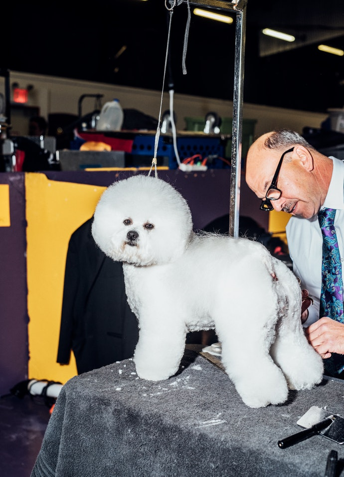 Westminster Dog Show photographed by Cait Oppermann