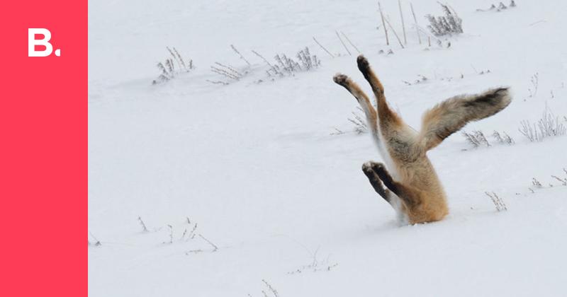 Финалисты конкурса Сomedy Wildlife Photography Awards — Bird In Flight
