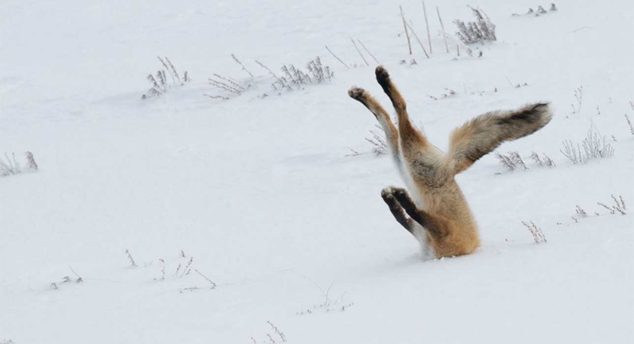 comedy-wildlife_01-1.jpg?auto=format&q=9