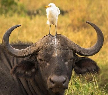 comedy-wildlife_17