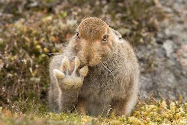 comedy-wildlife_19