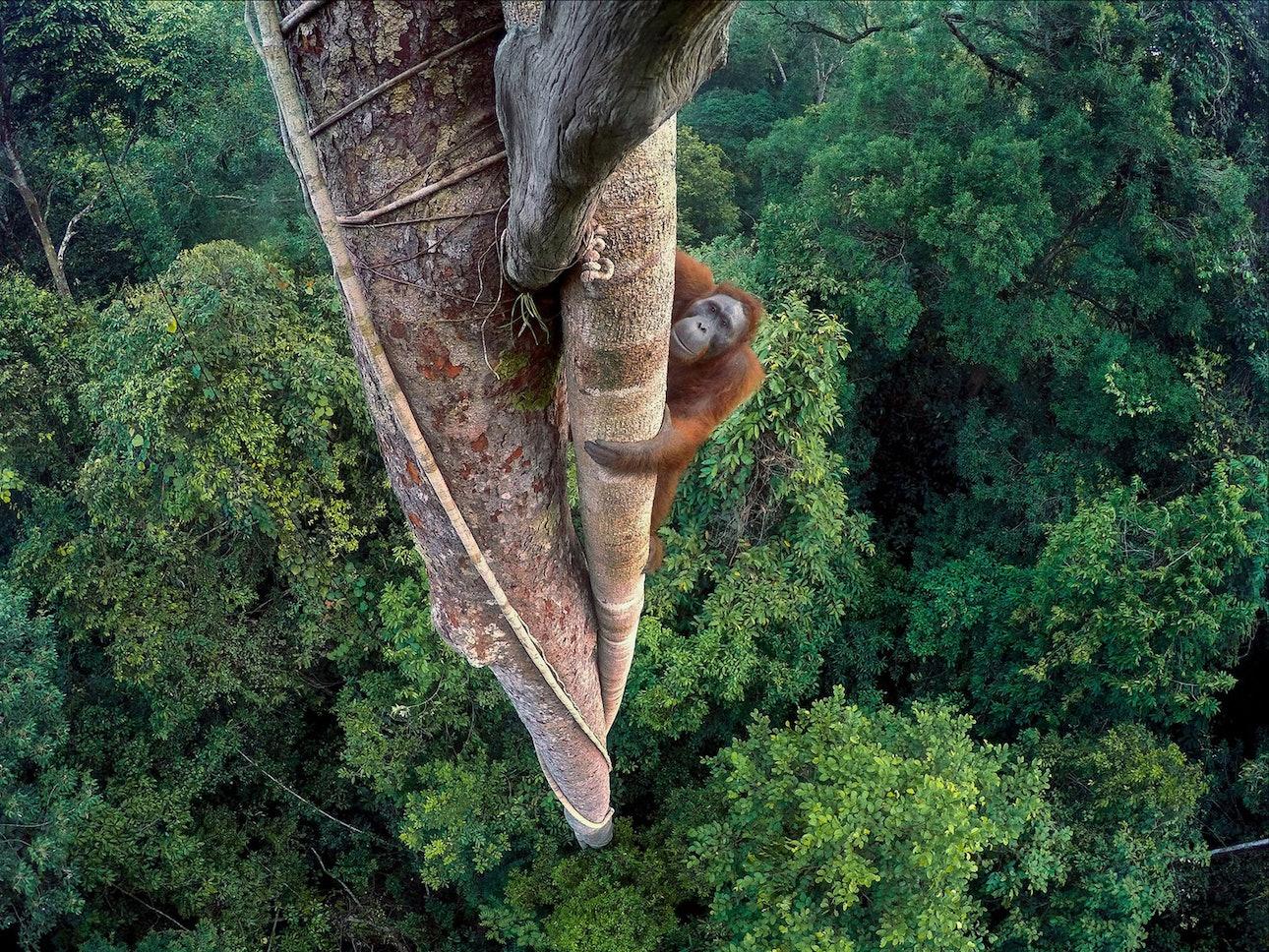 wildlife-photographer_01