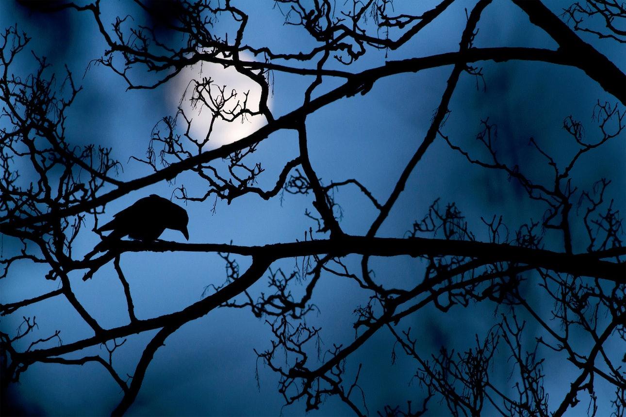 wildlife-photographer_02
