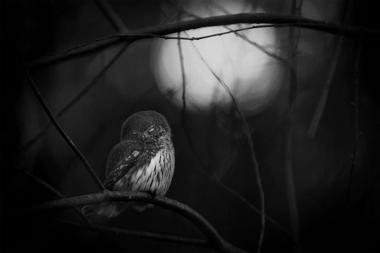 wildlife-photographer_05
