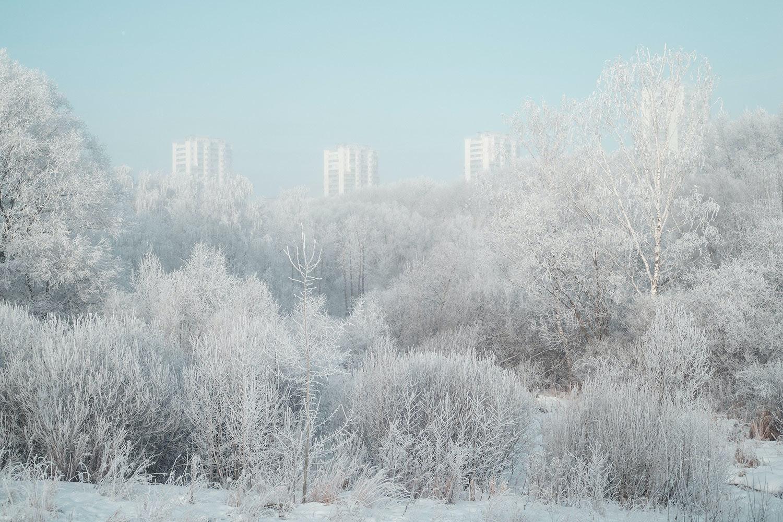 lookianov_winter