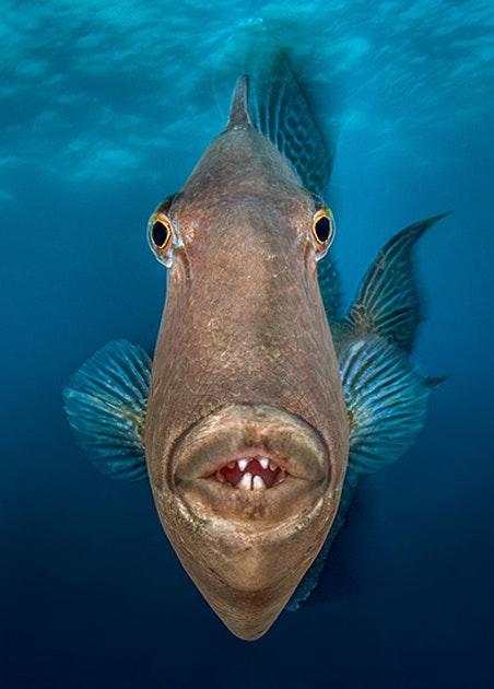 Объявлены победители конкурса Ocean Art Contest. Интернет-журнал birdinflight.com