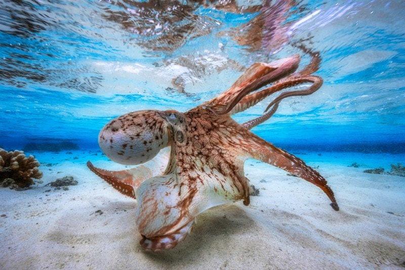 underwater-Photographer-of-the-Year_01