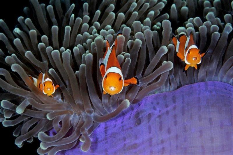 underwater-Photographer-of-the-Year_04