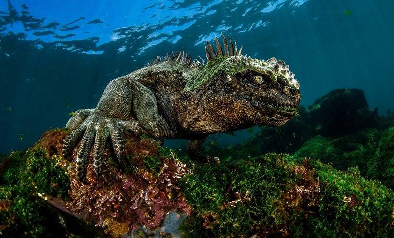 underwater-Photographer-of-the-Year_10