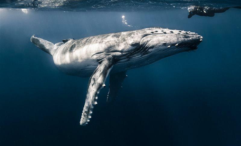 underwater-Photographer-of-the-Year_11