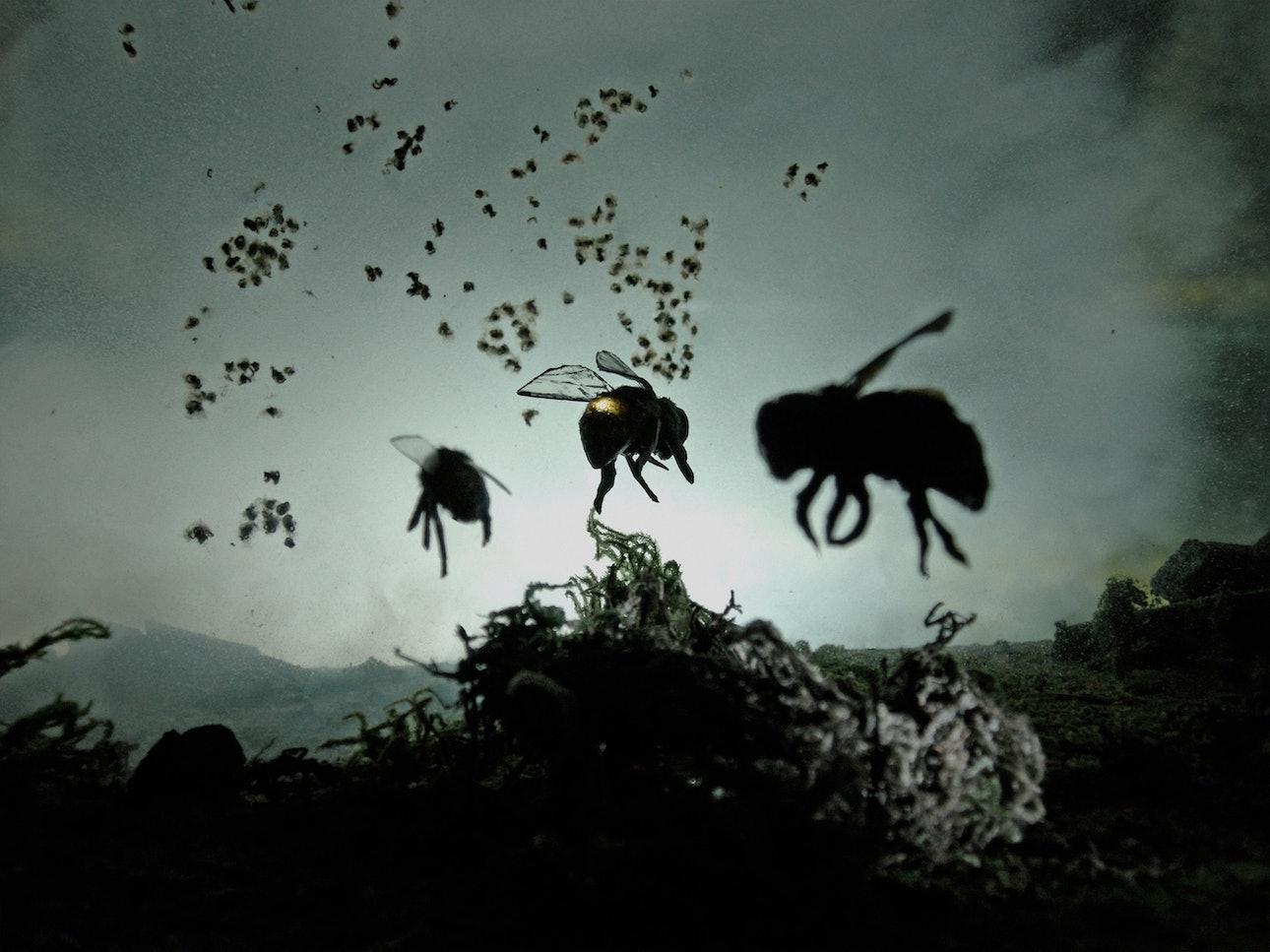 1_Proto_Bees-min