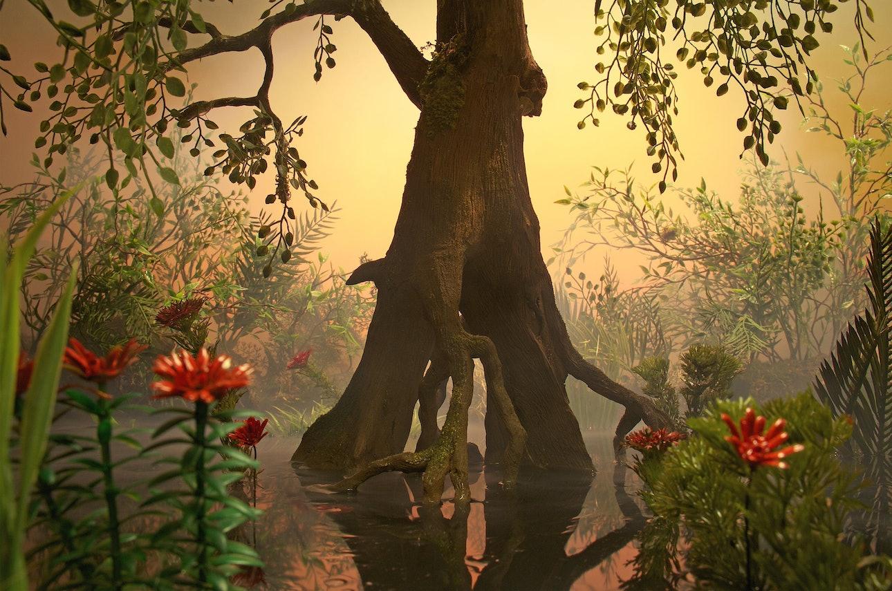 4_Swamp_Tree-min