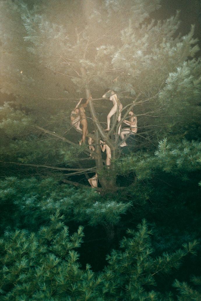 Tree_#3_2003_72x48_Web