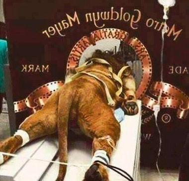 mgm-lion_09