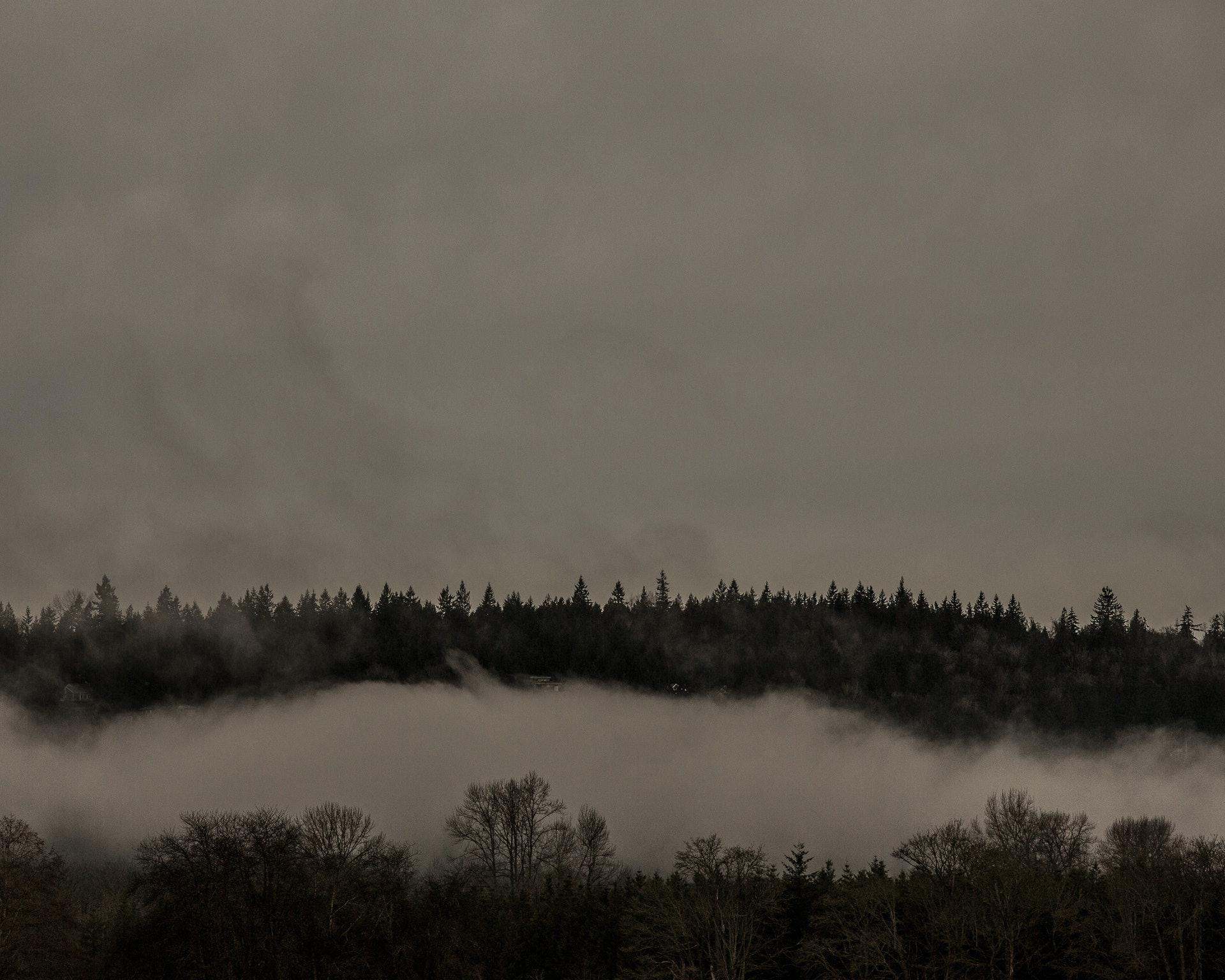 BOYKO_twin-peaks_04