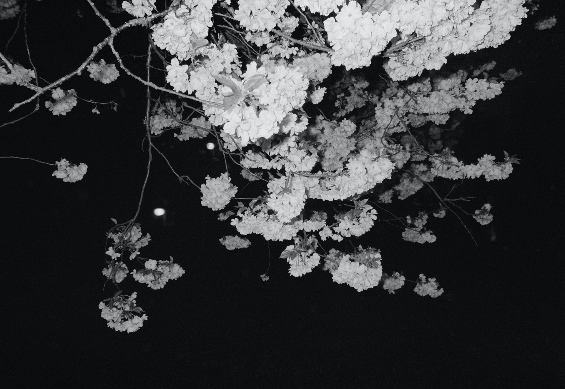 Miyki_Dear-Japanese1
