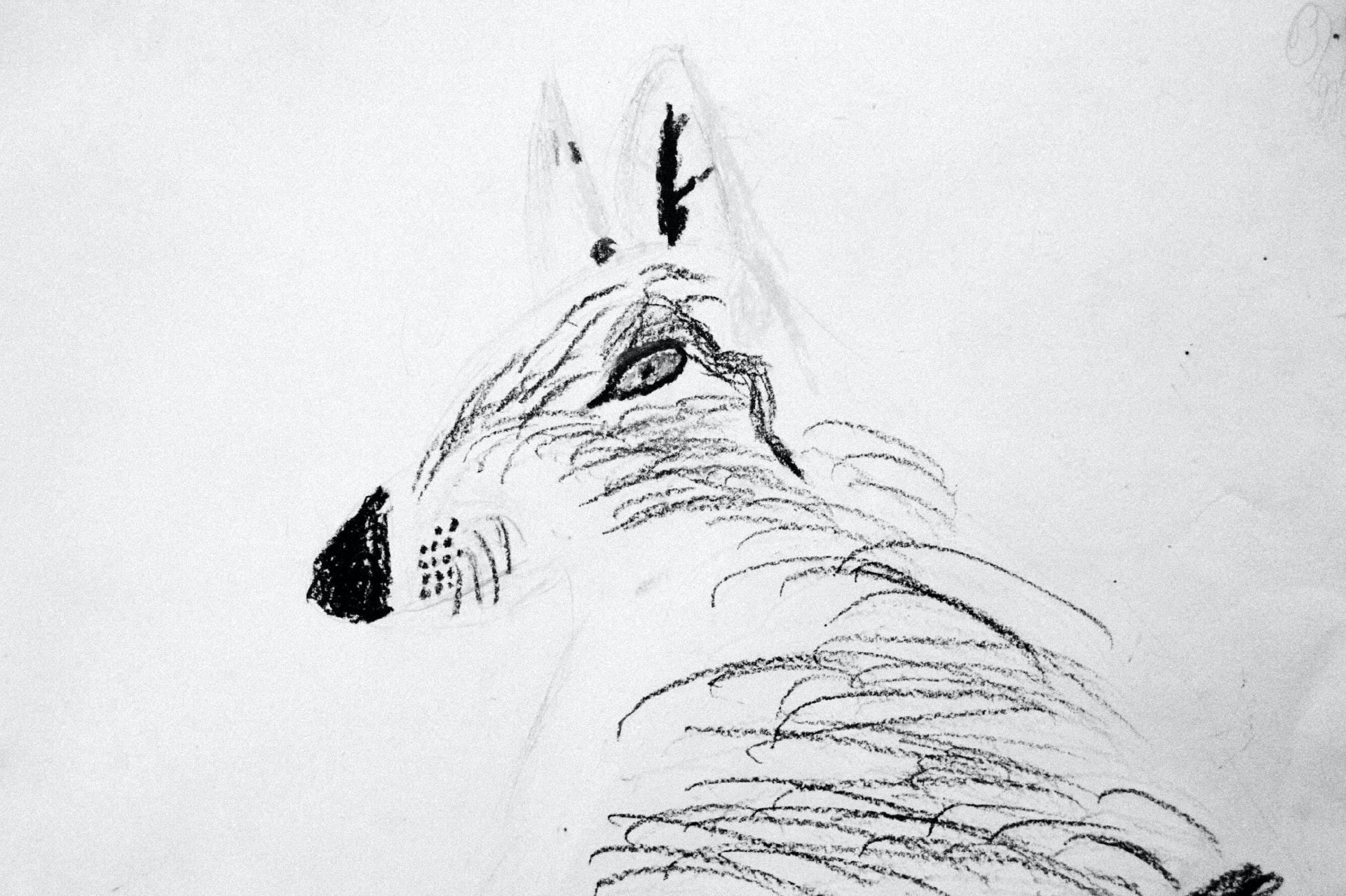 Raya-Mikhailova_dog_10