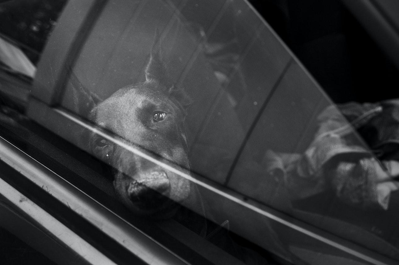 Raya-Mikhailova_dog_11