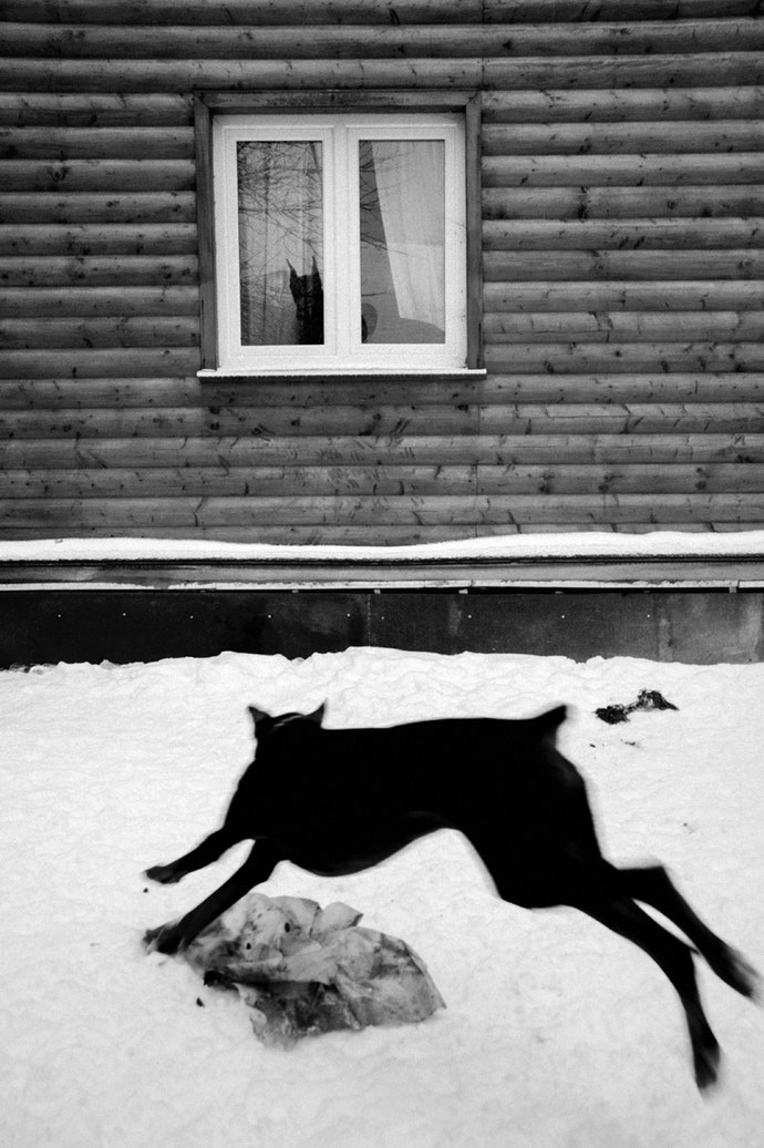 Raya-Mikhailova_dog_17
