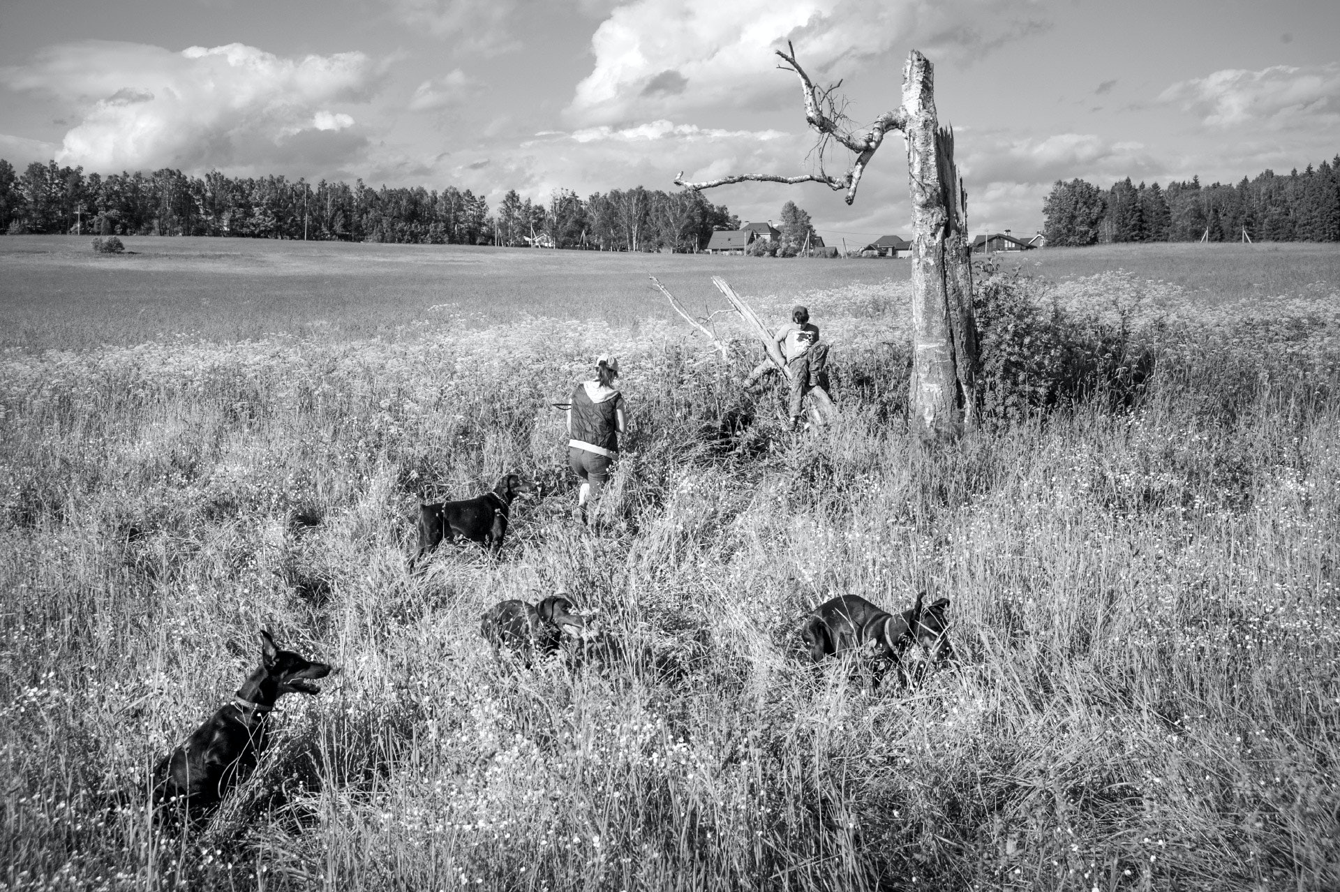 Raya-Mikhailova_dog_19