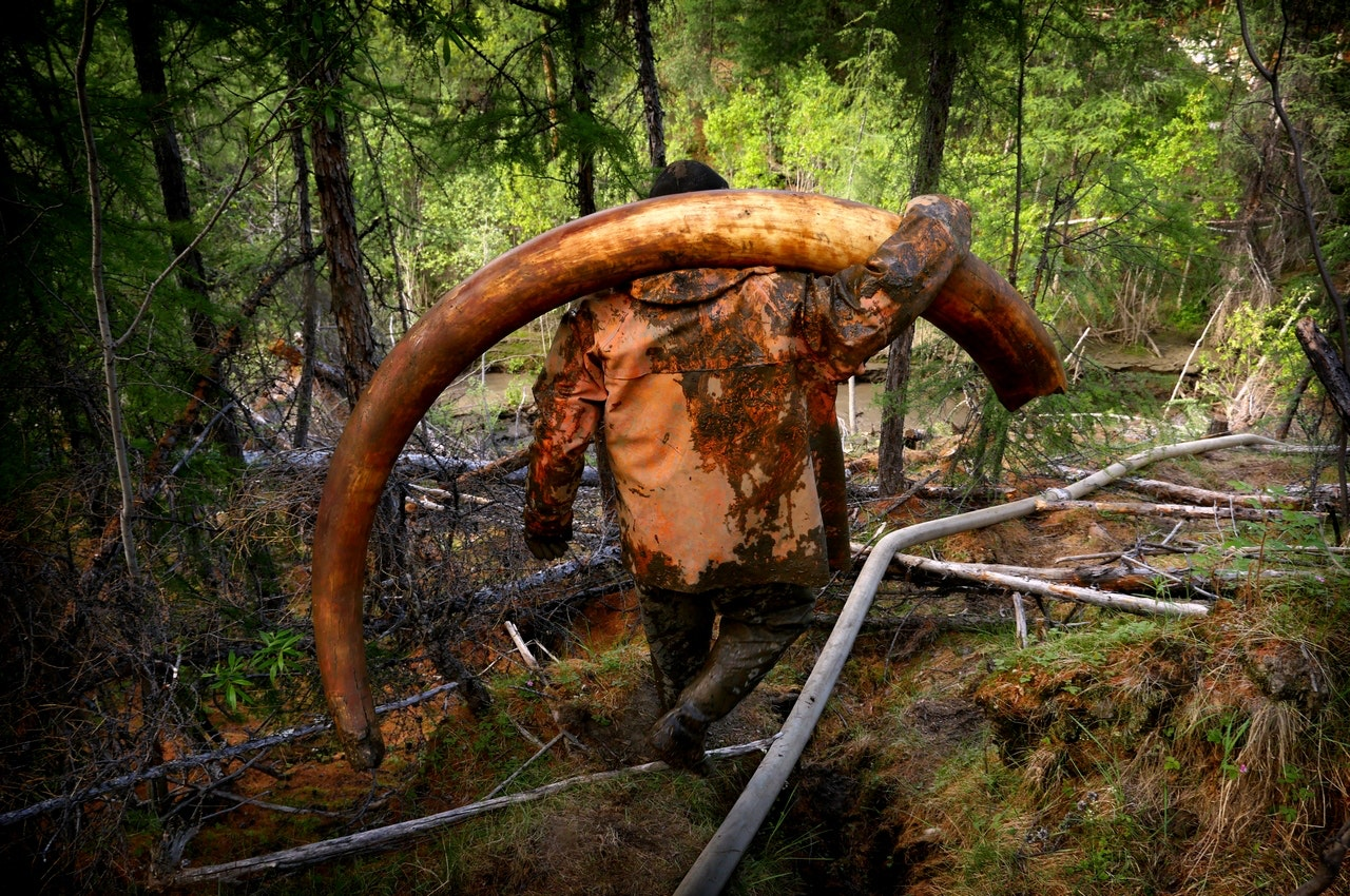 Tusk hunter with a 65kg mammoth tusk which was sold later that day for $34,000