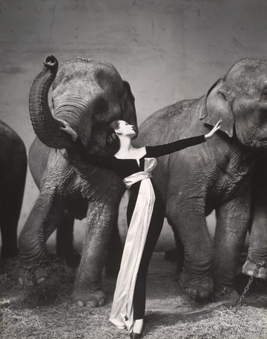 Dovima with Elephants, Evening Dress by Dior, Cirque d'Hiver, Paris,