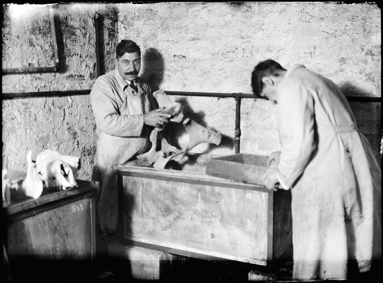 Michal-Sita-&-Wieslaw-Rakowski-(1903-1948)---015-(from-the-series-'The-Zoological-Archive')