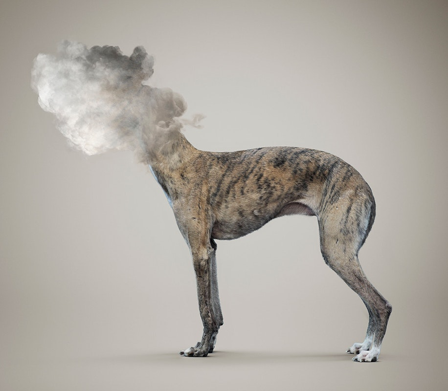 Vincent-Fournier---Cloudy-travelling-dog-(from-the-series-'Post-Natural-History')